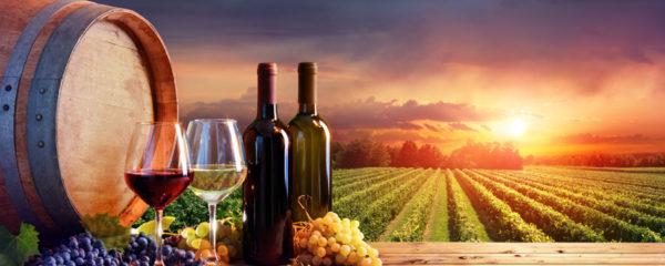 Vins naturels et vivants
